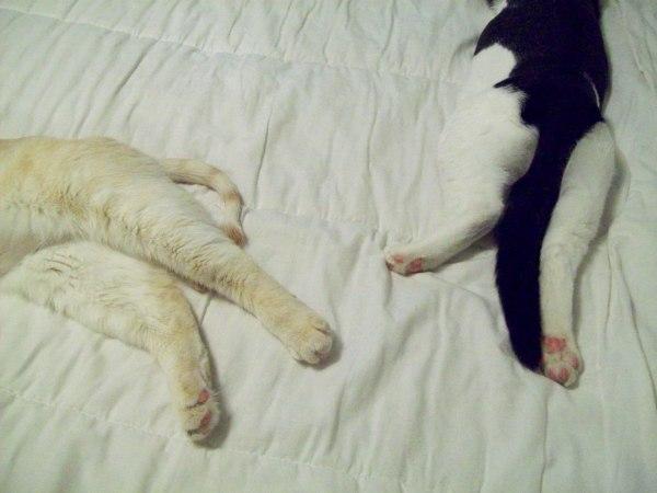 Kitties 043