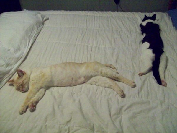Kitties 046