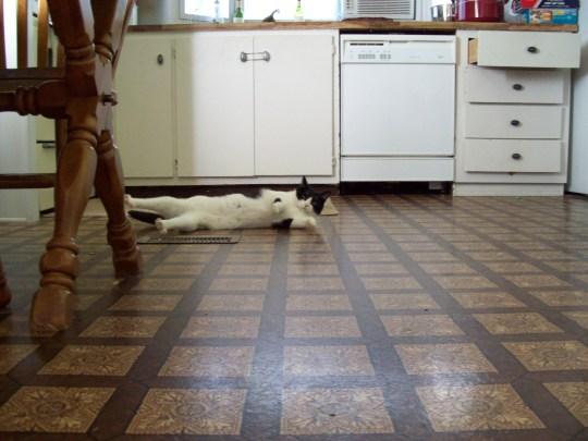 Kitties 088