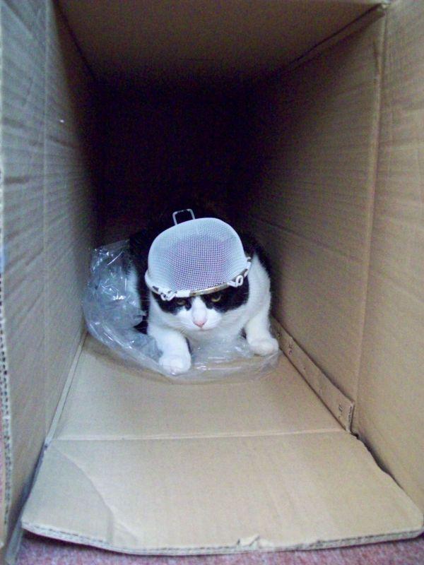 Kitties 101