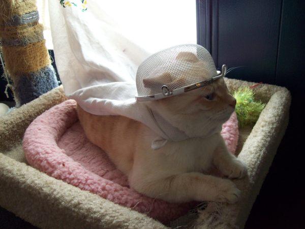 Kitties 113